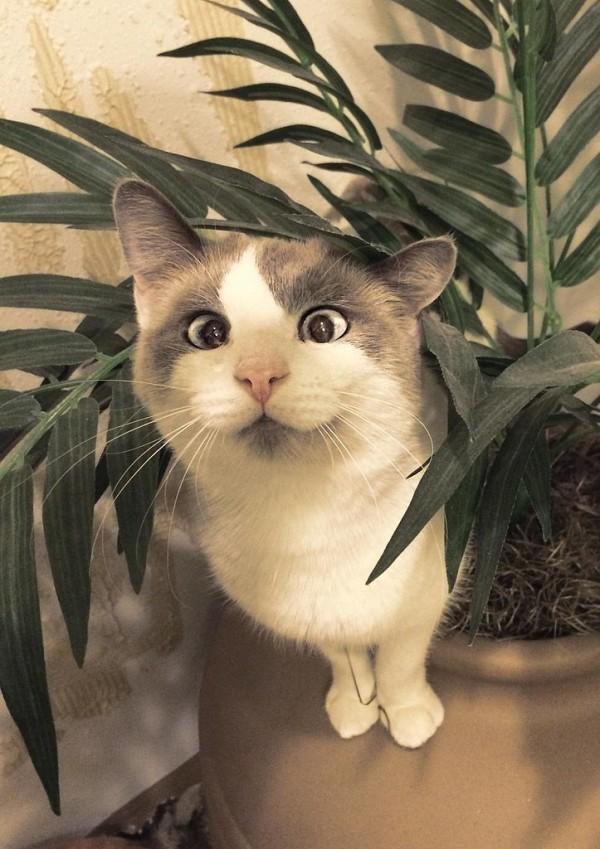 gatos engraçados 10
