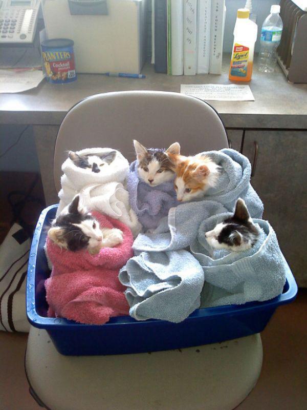 gatos engraçados 15