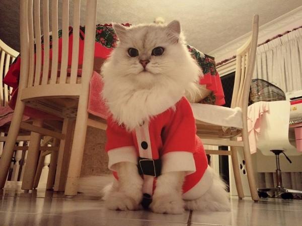 gatos engraçados 2