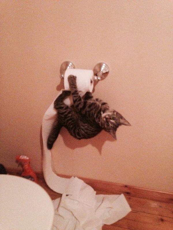 gatos engraçados 4