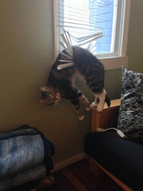 gatos engraçados 5