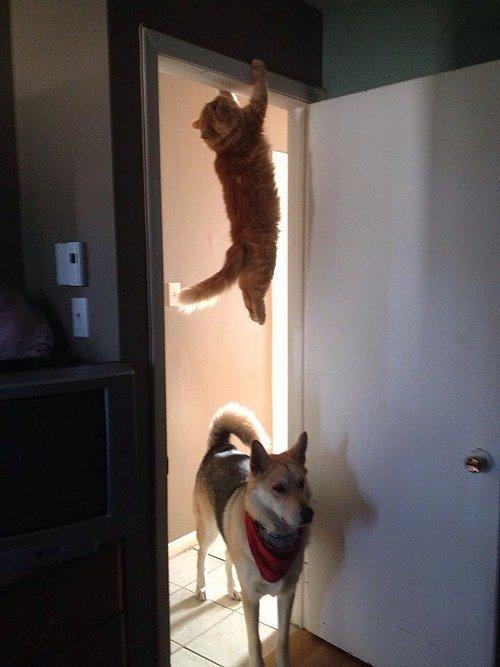 gatos engraçados 8