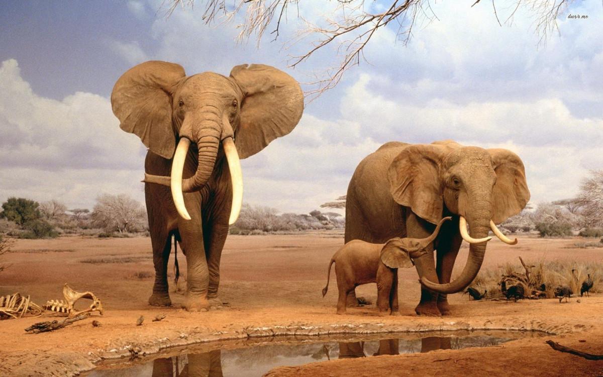 Com o EverNote, terás sempre uma mente de elefante