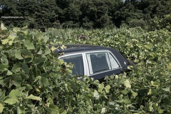 fukishima_carros
