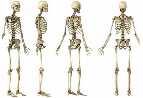 ossos_01
