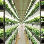 Quintas Verticais: A tecnologia que vai revolucionar a agricultura