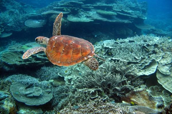 grande barreira de coral_1