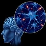 Investigação da UC: como os neurónios comunicam entre si
