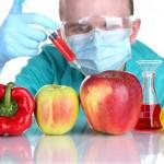 Alimentos transgénicos: sim ou não?