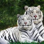 Mais de 50% dos grandes animais estarão extintos até 2100