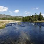 Porque estão os peixes de Yellowstone a morrer?