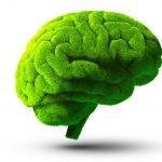 Somos o que comemos… e isso reflete-se no nosso cerebro