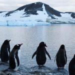 A Antártida está a ficar vestida de verde