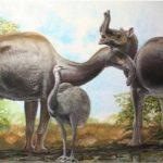 Animal estranho descoberto por Darwin finalmente foi identificado
