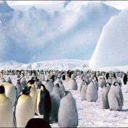 """Está a """"nascer"""" um Iceberg maior do que embateu no Titanic"""