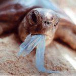 Dia Internacional sem sacos de plástico assinala-se a 3 de julho