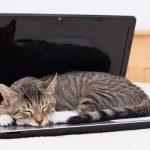 Dia Internacional do Gato, animal de companhia estrela da Internet
