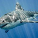 Tubarão que brilha no escuro é descoberto nas Ilhas Havaianas