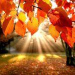 Olá Outono,Tchau Verão! Dicas para manter a energia