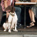 Animal de companhia pode passar a acompanhar o dono ao café