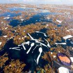 Em 2050 haverá mais lixo do que peixes nos Oceanos!