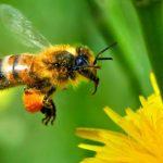 Diminuição drástica de insetos pode influenciar o ecossistema