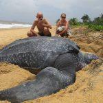Tartaruga considerada dinossauro encontrada numa praia Espanhola