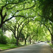 Árvores conversam entre si através de uma rede subterrânea