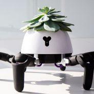 Robô que persegue o sol e cuida da planta que traz à cabeça