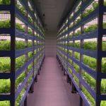 Nova quinta vertical em Las Vegas vai produzir 500.000 quilos de alimentos por ano