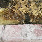 Incrível descoberta que um homem fez atrás dos tijolos da parede da sua casa