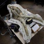Mamute com mais de 10.000 anos vivia no metro de Los Angeles