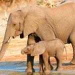 50% das espécies de zonas naturais correm risco de extinção