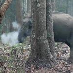 Imagens de um elefante a 'fumar' estão a intrigar cientistas
