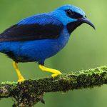 """Pássaros poderão conseguir """"ver"""" os campos magnéticos da Terra"""