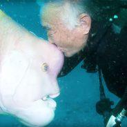 Mergulhador japonês fez amizade com peixe e visita-o há 25 anos