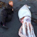 Incrível descoberta de uma lula gigantesca numa praia da Nova Zelândia