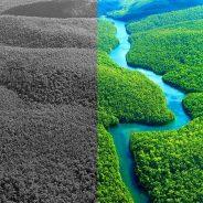 Amazónia regista a maior taxa de destruição da última década